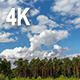 Clouds in Pine Forest - VideoHive Item for Sale