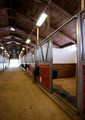 Stall Center Path Horse Paddock Equestrian Stable - PhotoDune Item for Sale