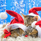 Christmas Santa Cats 4 - VideoHive Item for Sale