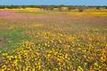 Wild flower landscape - PhotoDune Item for Sale