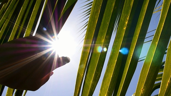 Touch the Sun Through Palm Leaves