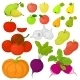 Vegetables and Fruits, Set - GraphicRiver Item for Sale