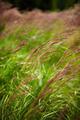 Closeup of grass - PhotoDune Item for Sale
