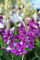 beautiful orchid flower. - PhotoDune Item for Sale