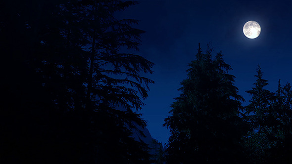 Night Forest With Moon