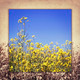 view the sky through the green grass with yellow flowers - PhotoDune Item for Sale