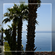 Palms Above The Sea - VideoHive Item for Sale
