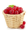 red currants on white - PhotoDune Item for Sale