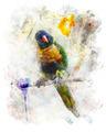 Watercolor Image Of Parrot (Rainbow Lorikeet) - PhotoDune Item for Sale