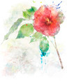 Watercolor Image Of  Hibiscus Flower - PhotoDune Item for Sale