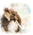 Watercolor Image Of  Elephant - PhotoDune Item for Sale