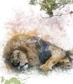 Watercolor Image Of  Sleeping Lion - PhotoDune Item for Sale