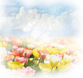Background With  Clouds And Tulips - PhotoDune Item for Sale