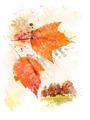 Watercolor Image Of  Autumn - PhotoDune Item for Sale