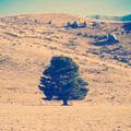 Lone Tree - PhotoDune Item for Sale
