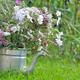 wildflower in garden  - PhotoDune Item for Sale