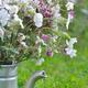 wildflowers in garden  - PhotoDune Item for Sale