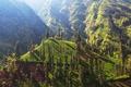 Field in Indonesia - PhotoDune Item for Sale