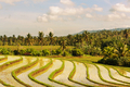 Rice terrace - PhotoDune Item for Sale