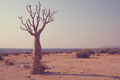 African landscapes - PhotoDune Item for Sale