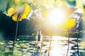 Summer pond - PhotoDune Item for Sale
