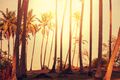 Palm plantation - PhotoDune Item for Sale