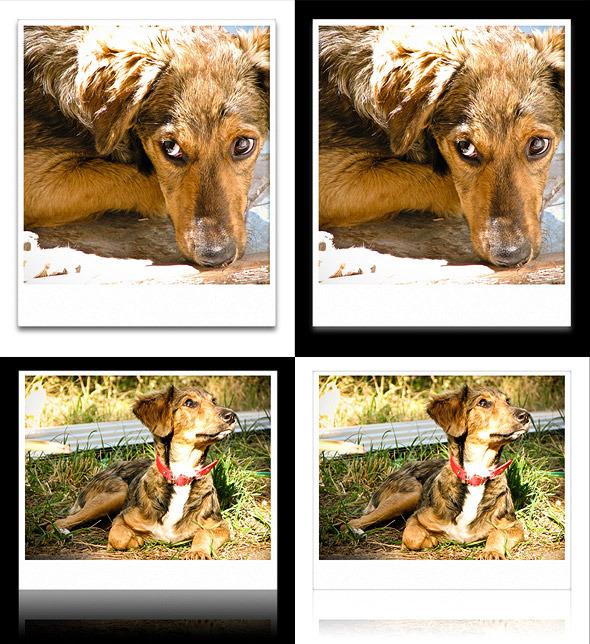 Polaroid Actions