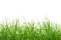 Grass on White - PhotoDune Item for Sale