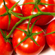 Bunch of ripe fresh red tomatoes - PhotoDune Item for Sale