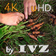 Harvest Carrots - VideoHive Item for Sale