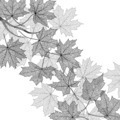 Autumn leaves monochrome template - PhotoDune Item for Sale