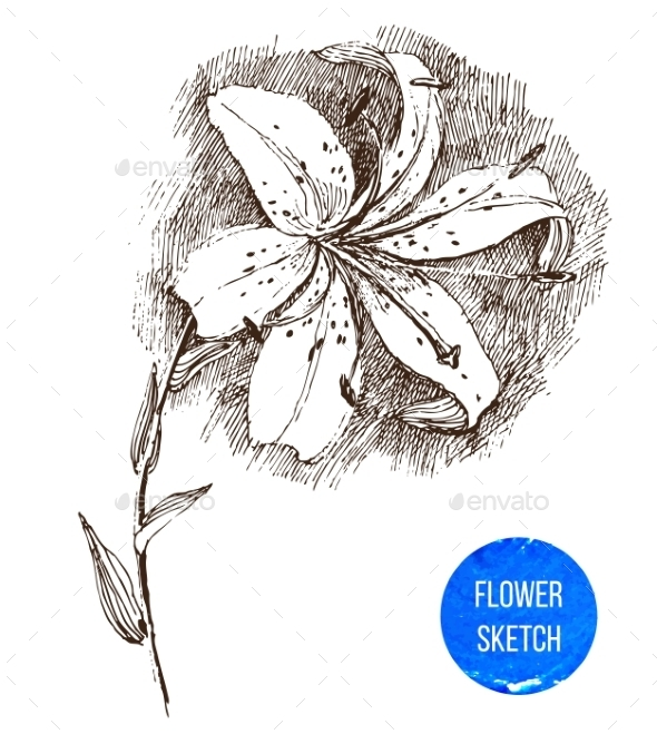 GraphicRiver Hand Drawn Lily Flower 8795547