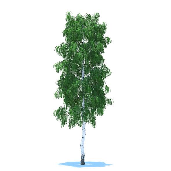 3DOcean Birch 8795635