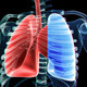 Lungs And Skeleton - VideoHive Item for Sale