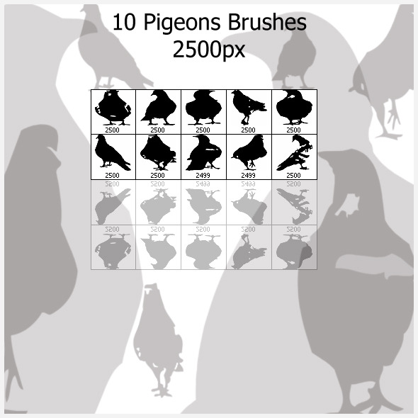 10 Pigeons Brushes (2500px) - Brushes Photoshop