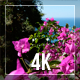 Flowers And Sea - VideoHive Item for Sale