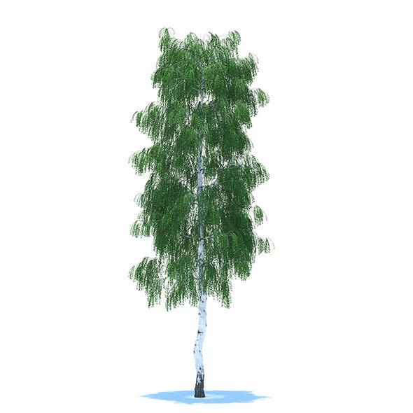 3DOcean Birch 8798264