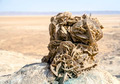 Desert rose - PhotoDune Item for Sale