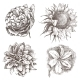 Hand Drawn Flowers - GraphicRiver Item for Sale