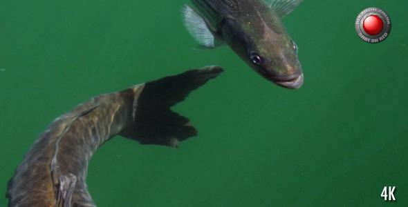 Fish in the Lake