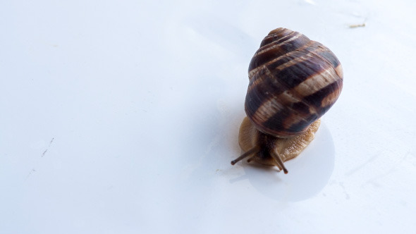 Snail Crawling On A White Surface