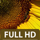 Bee Hovering Over a Sunflower 2 - VideoHive Item for Sale