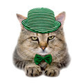cat in a green hat and a butterfly tie - PhotoDune Item for Sale