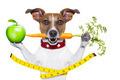 healthy dog - PhotoDune Item for Sale
