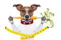 slim healthy dog - PhotoDune Item for Sale