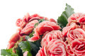 Pink begonia flowers - PhotoDune Item for Sale