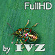 Chrysolina Americana - VideoHive Item for Sale