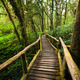 Jungle landscape. Wooden bridge at misty tropical rain forest. T - PhotoDune Item for Sale