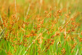 wild grass in the nature. - PhotoDune Item for Sale