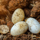 Cobra eggs on the ground. - PhotoDune Item for Sale
